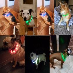 Kutya led fényjelző nyakpánt